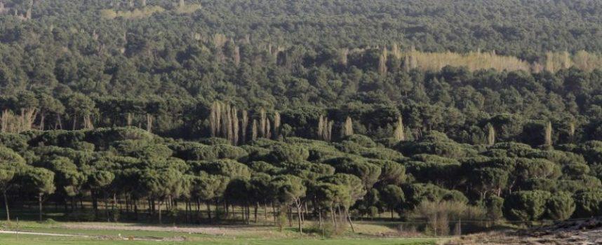El aprovechamiento de la biomasa llega a Sanchonuño