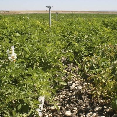 Unión de Campesinos de Segovia-UCCL denuncia que se producen, de media, más de 40 robos diarios en el campo