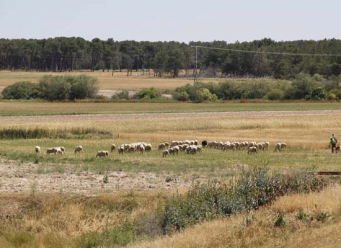 Cerca de 3.500 agricultores y ganaderos segovianos podrán decidir la representatividad de las Organizaciones Profesionales Agrarias