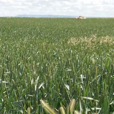 Unión de Campesinos de Segovia abordará mañana en Nava de la Asunción la situación de los seguros agrarios y las semillas