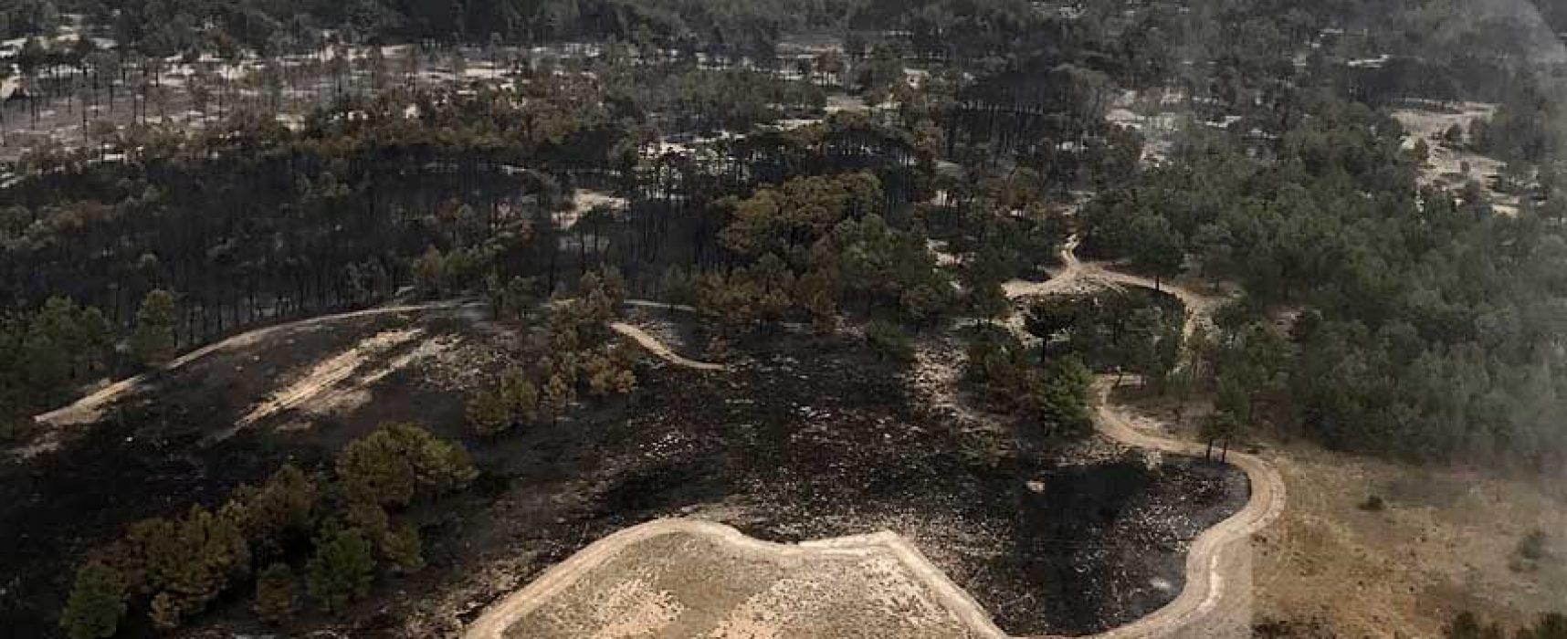 El incendio de Navalilla se declara controlado y se baja a nivel 0
