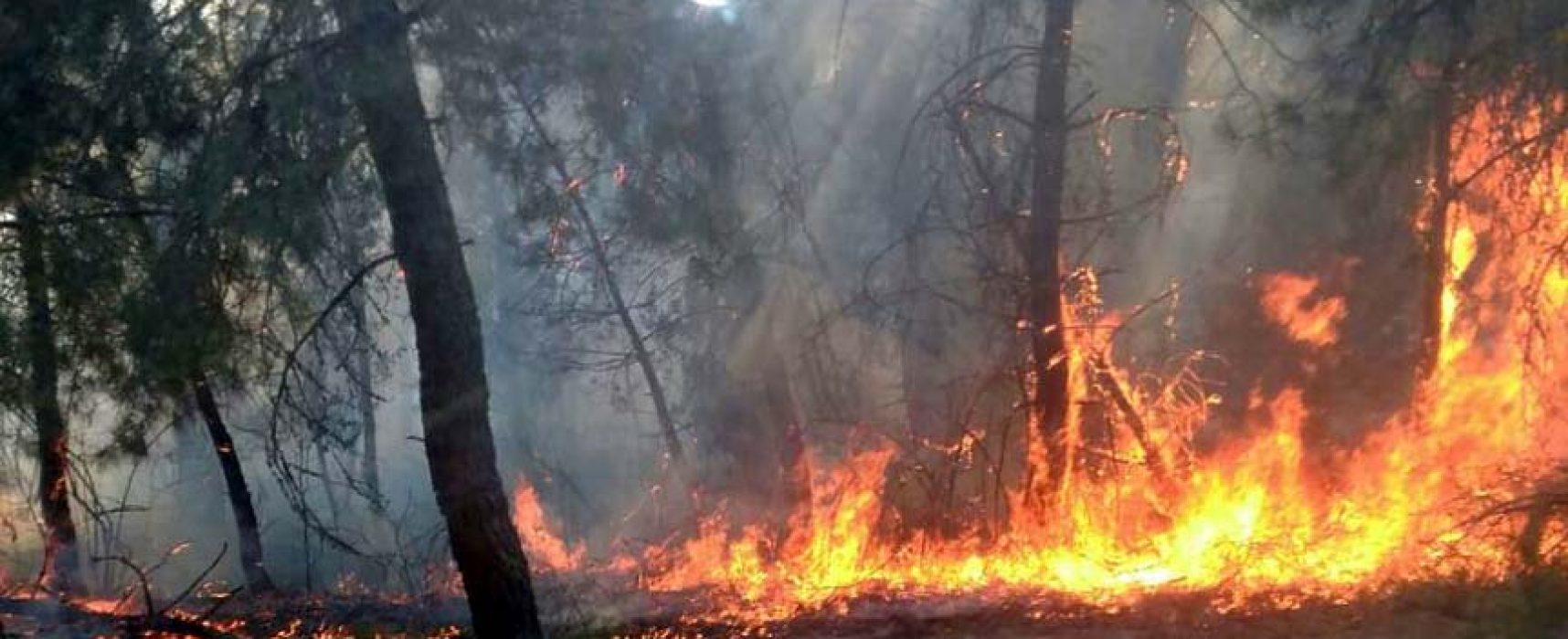 La Junta mantiene el nivel 1 en el incendio de Navalilla por las malas condiciones meteorológicas