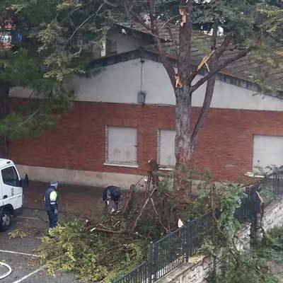 Caída de ramas de uno de los árboles del colegio Santa Clara