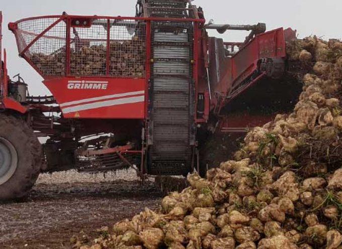 UCCL Segovia convoca a los cultivadores de remolacha a una reunión informativa en Cuéllar