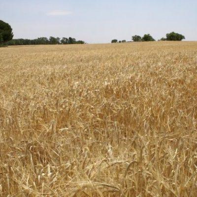 Agricultura y Ganadería aplaza un año la aplicación de la nueva orden de purines