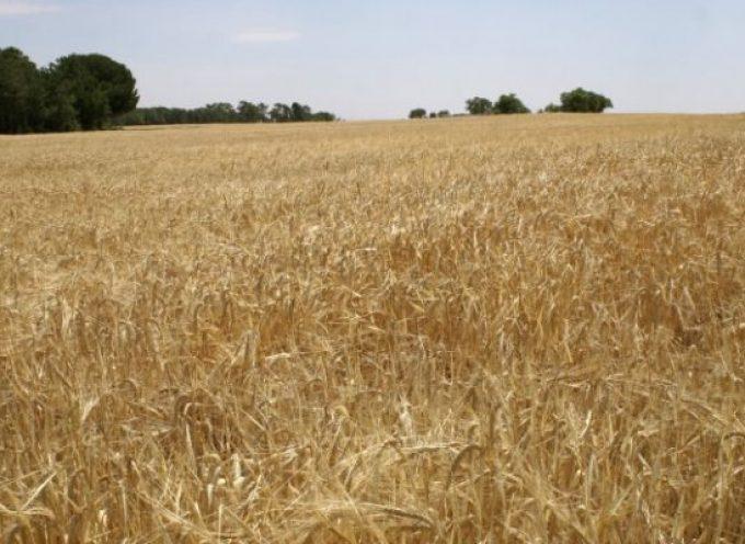 San Isidro, patrón de agricultores y agricultoras, de ganaderos y ganaderas