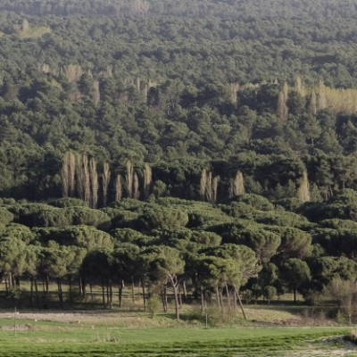 La Junta destina más 700.000 euros para tratamientos selvícolas en las comarcas de Pinares-Navas de Oro y Santa María de Nieva