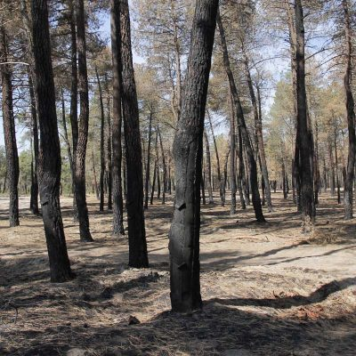 """La Junta pide precaución para evitar los incendios por la """"pelusa"""" de chopo, altamente inflamable"""