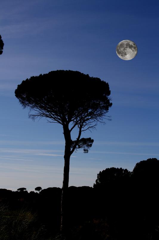 La luna llena acompañará el desarrollo de la Velada Poético Musical.