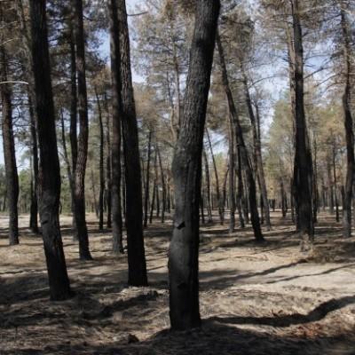 La Junta aprueba trabajos selvícolas preventivos de incendios forestales en varias localidades de la comarca