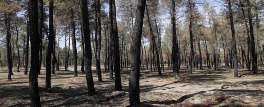 A las 18.05 horas se ha iniciado un incendio en el término municipal de Lastras de Cuéllar, ya controlado