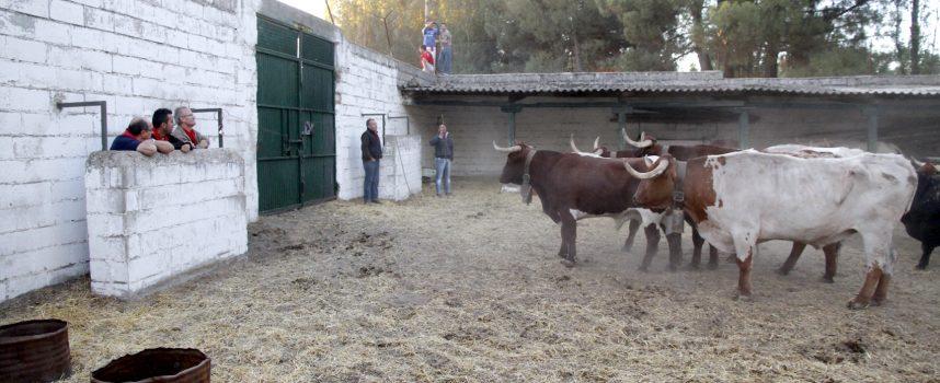 """Pepe Colás y los """"Punki&Folkis"""" graban el videoclip del """"Pasacalles de El Embudo"""" en los corrales del Cega"""