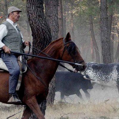 Abierto el plazo para la inscripción de caballistas para acompañar a la manada en los encierros