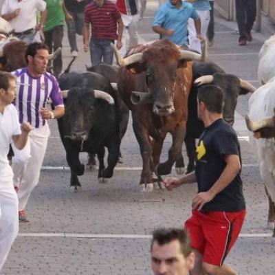 El PSOE, crítico con el balance económico de los Festejos Taurinos