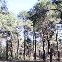 El Ayuntamiento de Cuéllar ingresa un 40% más de lo tasado por sus aprovechamientos forestales