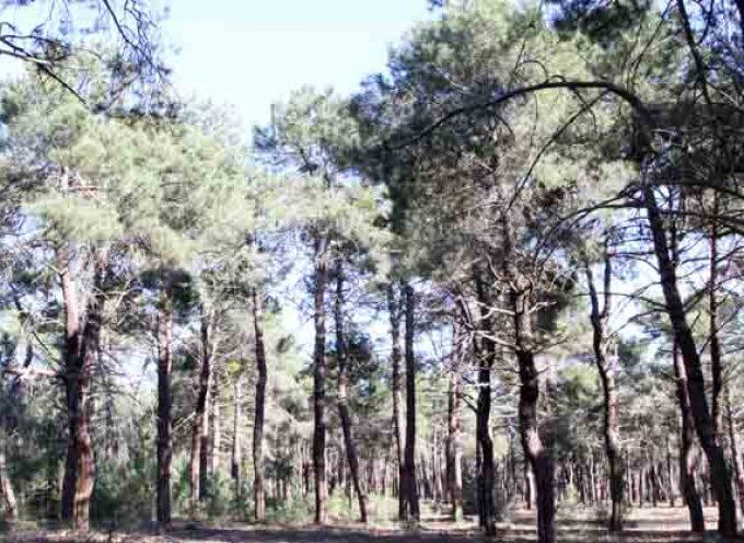 La Junta rebaja el riesgo de incendios forestales a Peligro Bajo y suaviza las limitaciones al uso del fuego