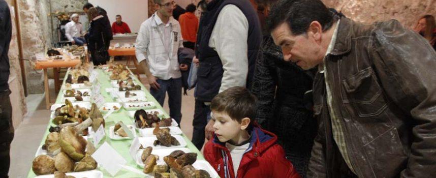 La Sociedad Micológica acercará de nuevo el mundo de las setas a los vecinos de la comarca