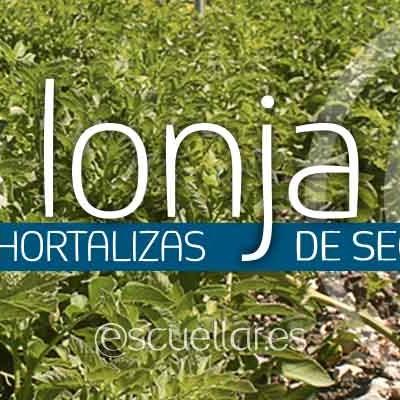 Cotizaciones hortalizas lonja de Segovia