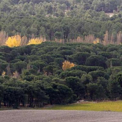 Villa y Tierra espera recaudar más de 215.000 euros con los aprovechamientos de maderas de sus montes