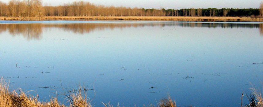 SEO/BirdLife incluye las Lagunas de Lastras y El Espadañal entre los lugares a restaurar para frenar la pérdida de biodiversidad