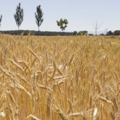 La comarca registrará un incremento de las temperaturas con máximas de hasta 37,3 grados y mínimas de 18,5 grados