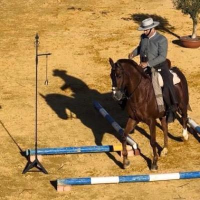 La Asociación Amigos del Caballo organiza un Clinic de Equitación de Trabajo
