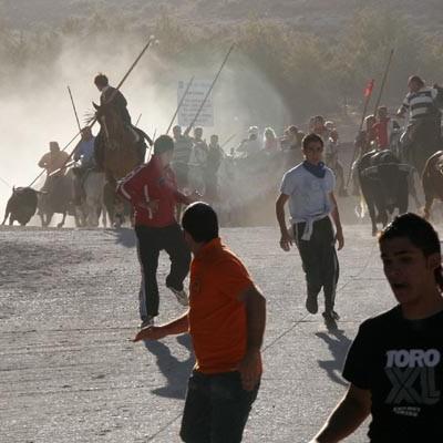 Las reses gaditanas de Manuel Blázquez y Rein protagonizarán el encierro del domingo 30 de agosto en Cuéllar