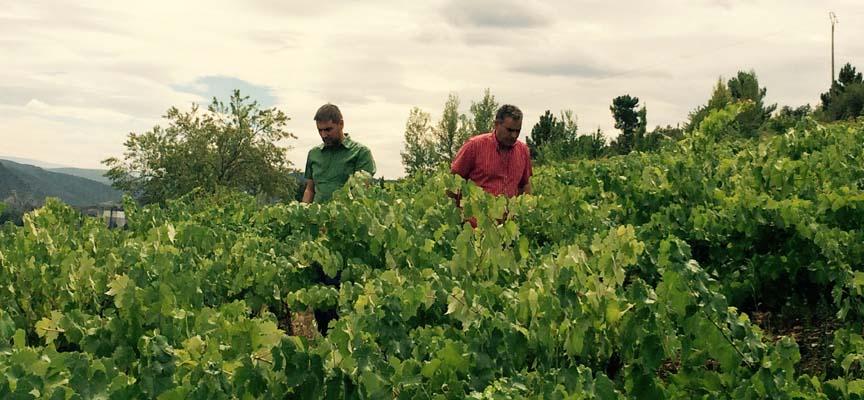 Rubén Salamanca (izq) junto al propietario visitando el viñedo en El Bierzo.