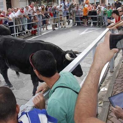 ANPBA presenta queja formal ante el Procurador del Común por la muerte de tres toros en los encierros de Cuéllar 2015