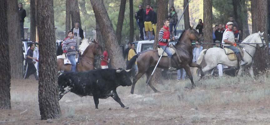 encierro miercoles toros 2015-ES_7723