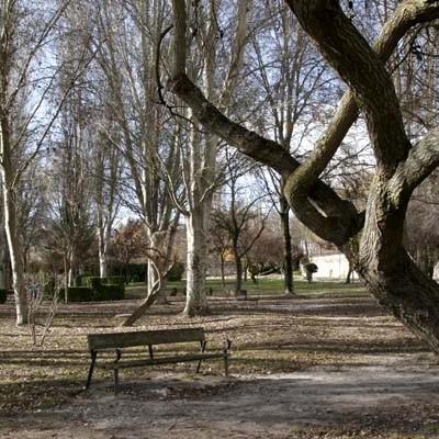Medio Ambiente iniciará en noviembre las podas y tratamientos en parques y jardines de la villa