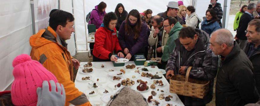 Un centenar de personas se dieron cita en la X Jornada Micológica en el paraje de San Benito de Gallegos