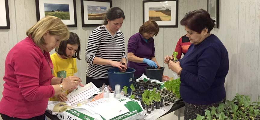 Voluntarias preparando las plantas para su entrega.