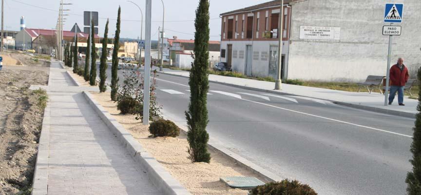 Cipreses y tuyas plantados en la carretera de Segovia.