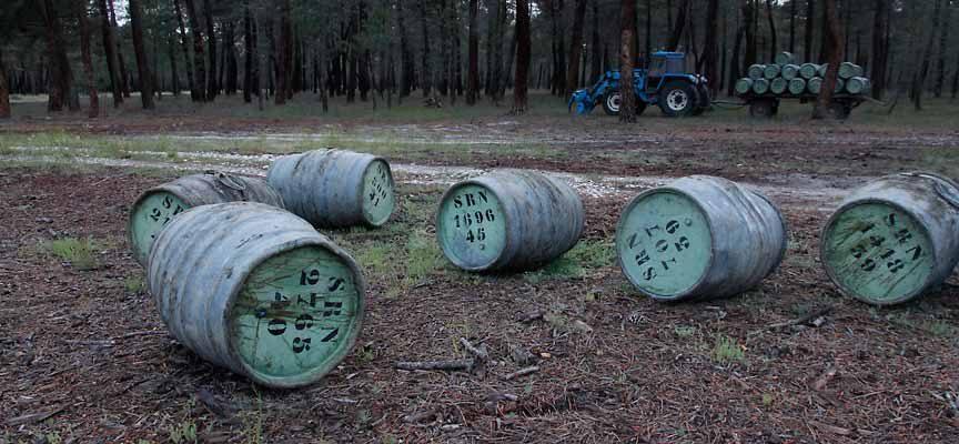 Villa y Tierra de Cuéllar licita 30 lotes de aprovechamientos de resina de sus montes