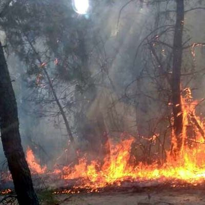 Fomento y Medio Ambiente declara la alerta por riesgo meteorológico de incendios forestales en toda la Comunidad mañana 18 de julio