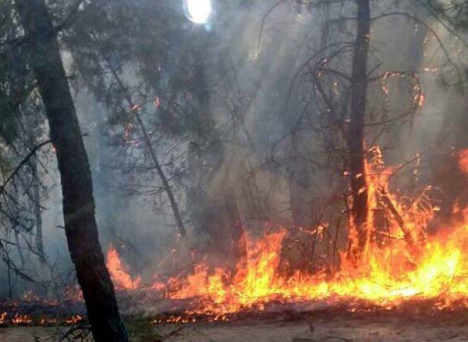 La Junta eleva el riesgo de incendios y declara la alarma del 23 al 25 de julio