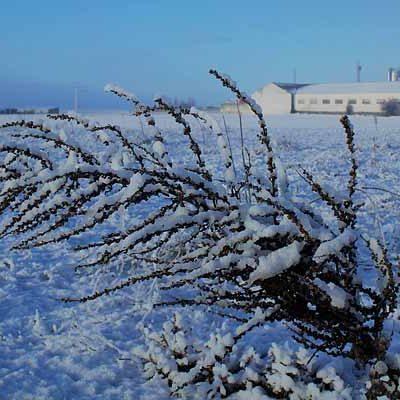 Previsión de nevadas, vientos y mínimas de hasta -7ºC durante las próximas horas en Castilla y León