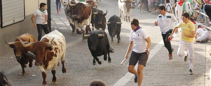 Los toros de `Lagunajanda´ se alzan con el XX Trofeo a la Mejor Ganadería de los Encierros