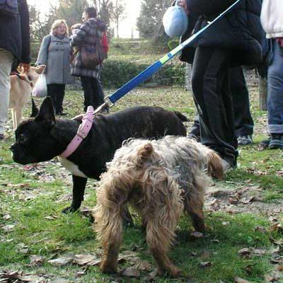 El Ayuntamiento controlará la tenencia de animales potencialmente peligrosos a través de la Ordenanza de Seguridad