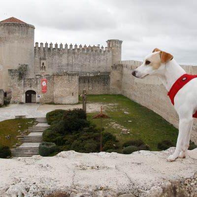 Pipper `el primer perro turista´ visitó Cuéllar