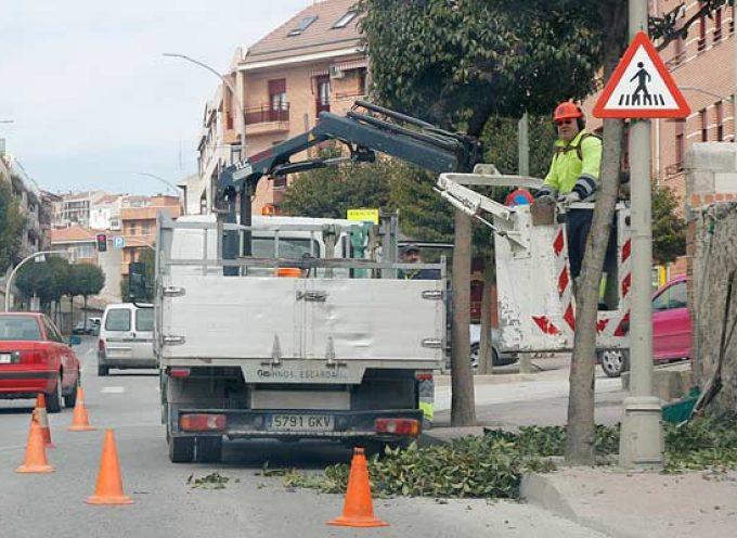 El Ayuntamiento no considera `agresiva´ la poda de los árboles de calles y jardines