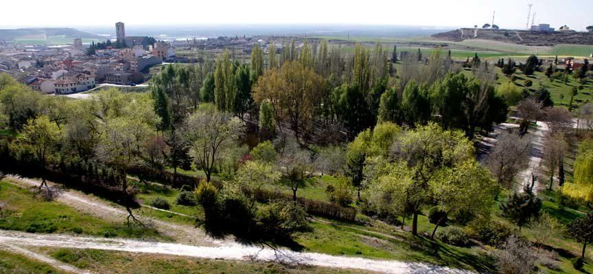 PP y Ciudadanos piden un informe sobre el estado de los árboles de la Huerta del Duque