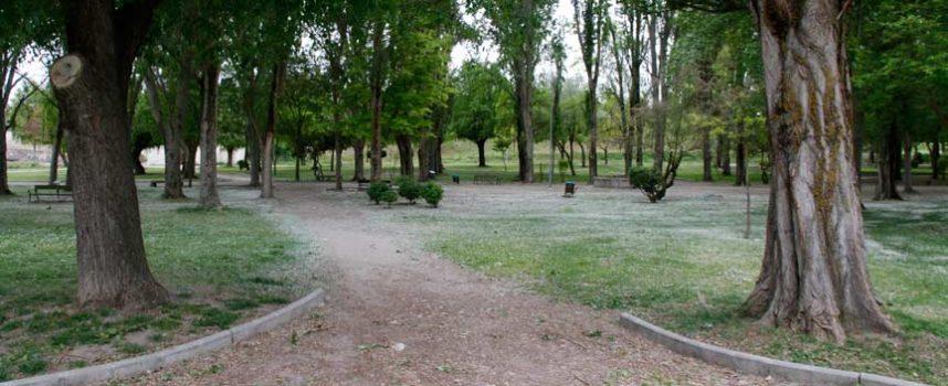 Medio Ambiente talará casi medio centenar de chopos de la Huerta del Duque