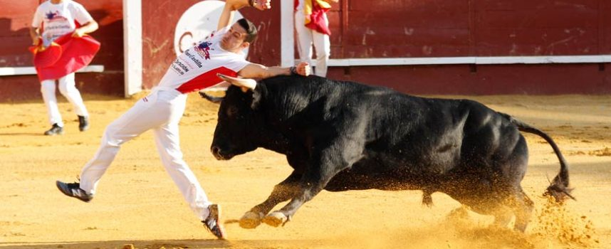 El Ayuntamiento de Cuéllar renuncia a celebrar festejos taurinos en agosto