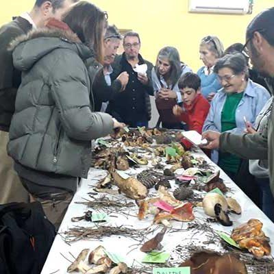 Fuenterrebollo invitó a conocer las setas de temporada en sus V Jornadas Micológicas