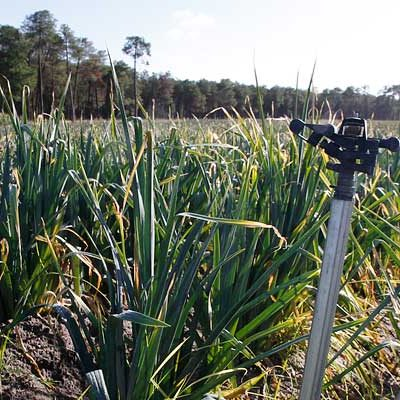 La Junta incluye La Churrería y Los Arenales entre las zonas vulnerables a la contaminación por nitratos