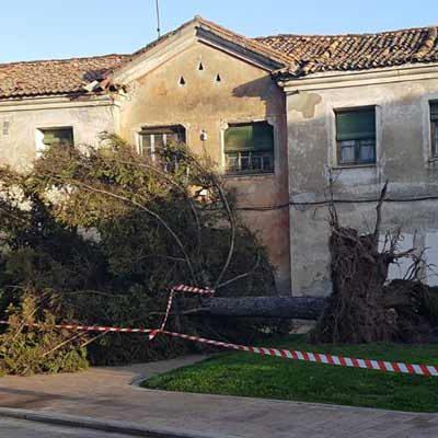 El fuerte viento provoca la caida de árboles y elementos urbanos en Cuéllar