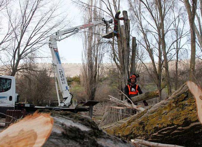 Los trabajos de tala y poda en el parque de la Huerta del Duque llevan a su cierre por seguridad