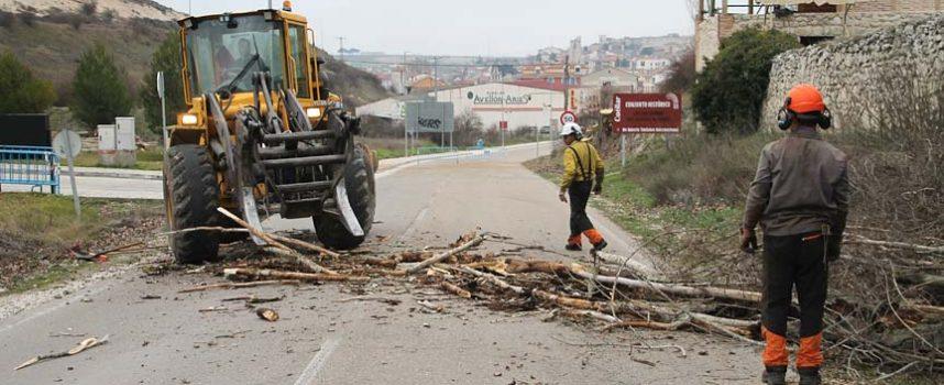 Avanzan los trabajos de tala de chopos en la carretera de Peñafiel